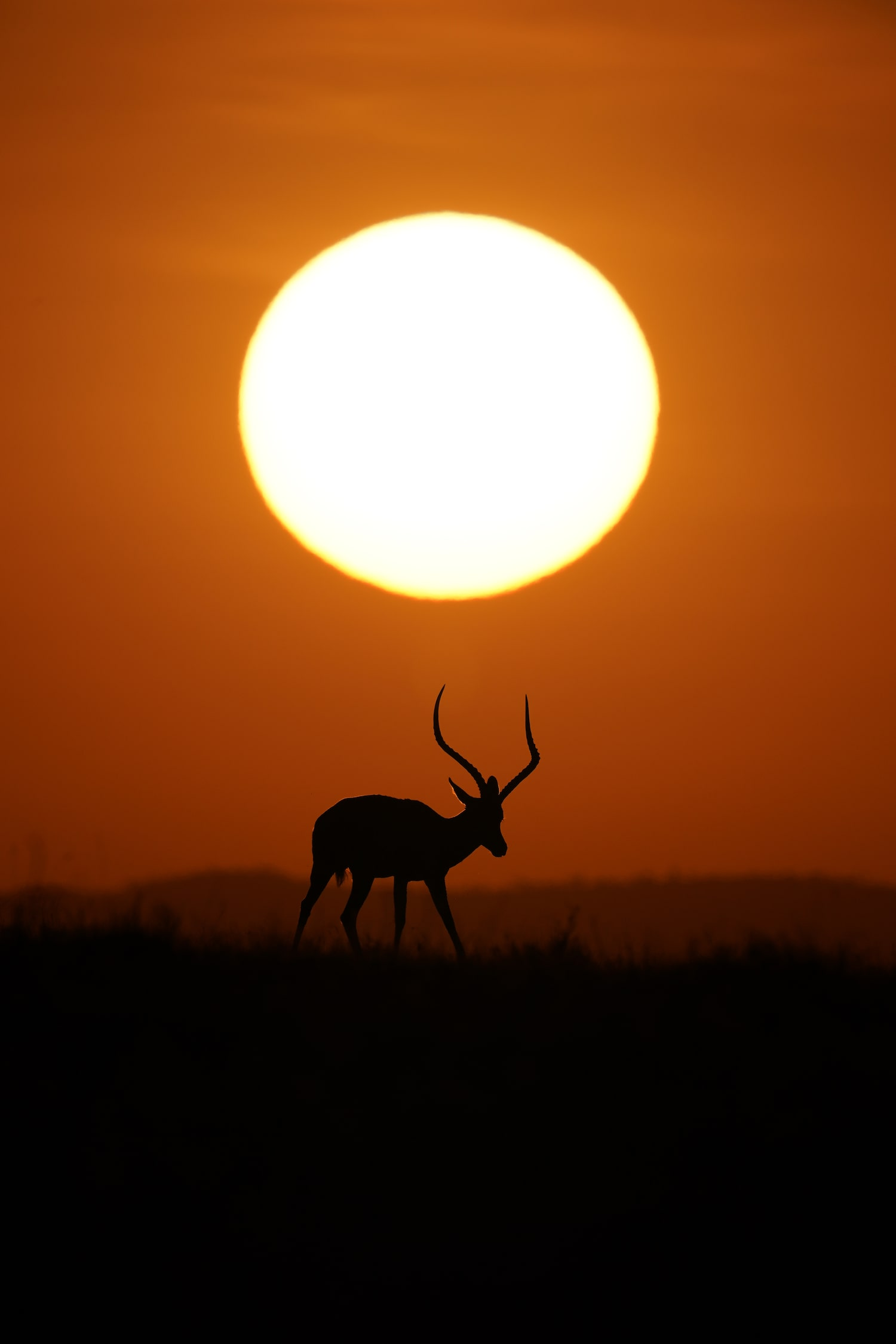 sun-about-to-set-deer-in-the-fields-alpha-9