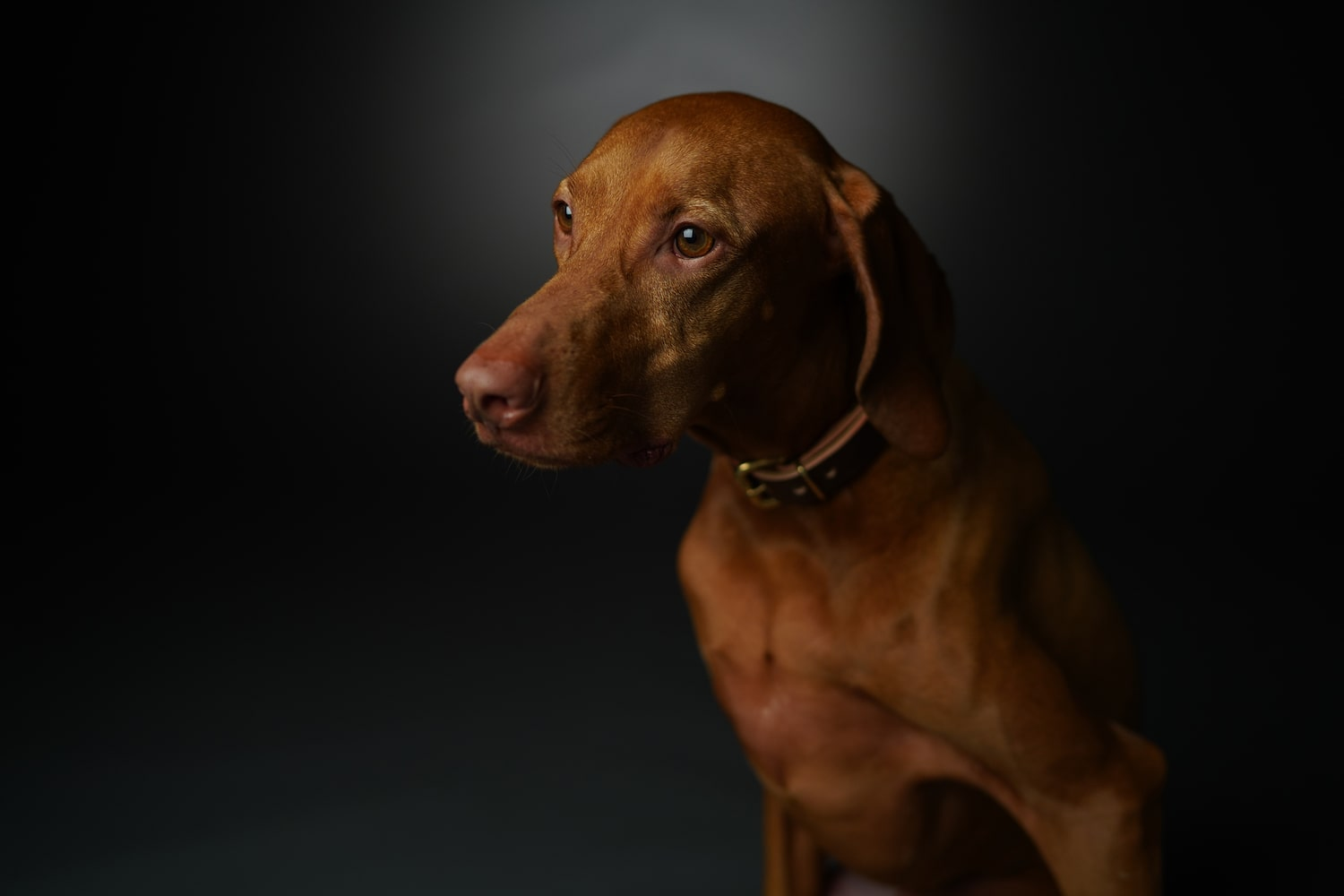 side-portrait-brown-dog-alpha-7RIV
