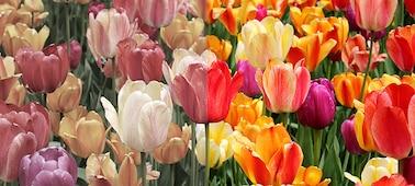 Gambar yang menunjukkan warna alami dengan XR Triluminos PRO™