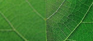 Gambar close up daun menunjukkan detail dengan 4K XR Super Resolution