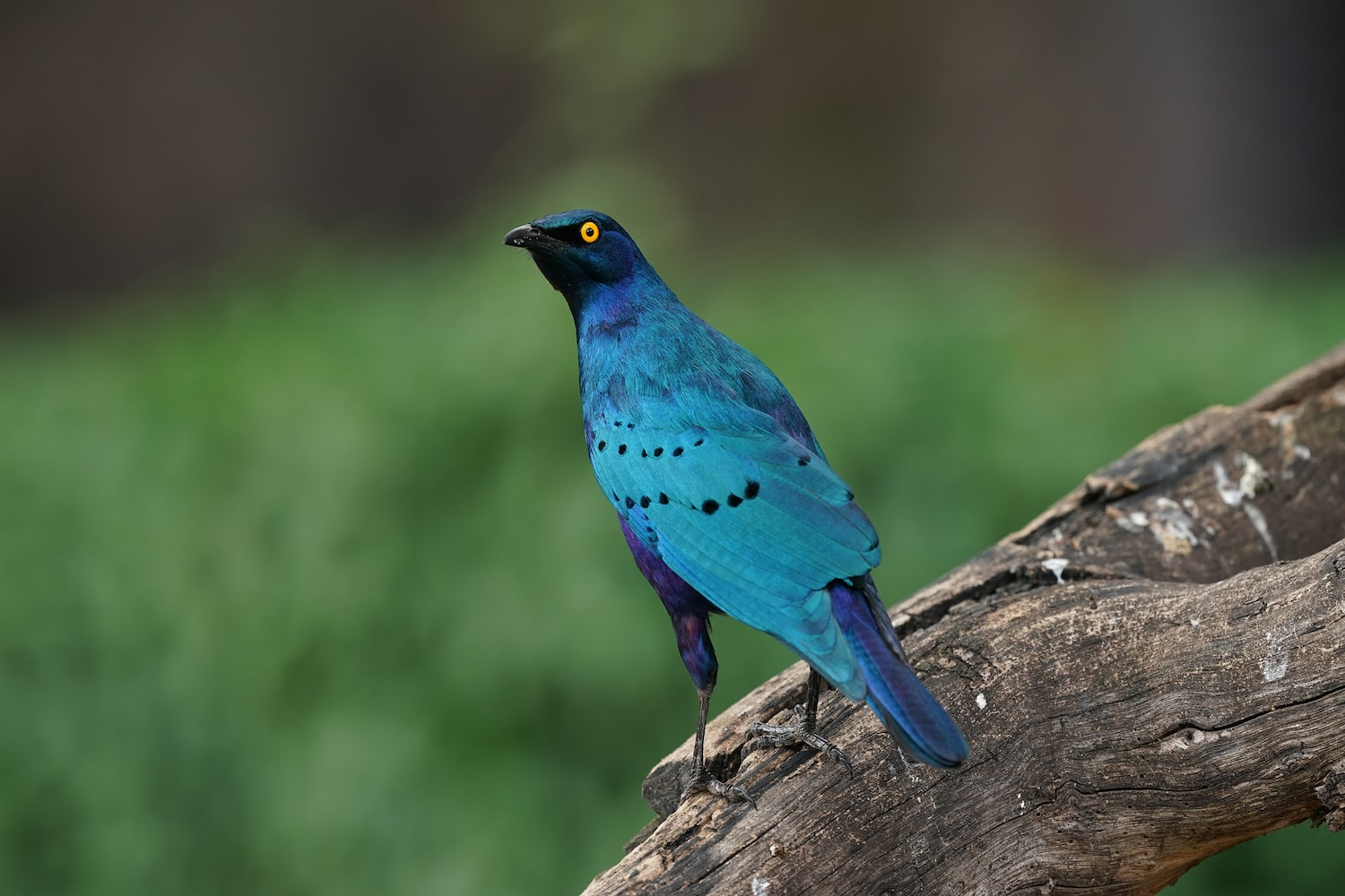 bright-blue-bird-perched-alpha-9