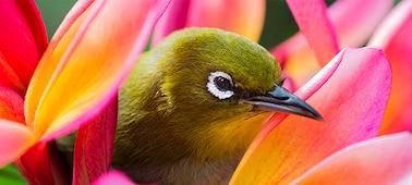 Gambar burung yang menunjukkan detail gambar 4K
