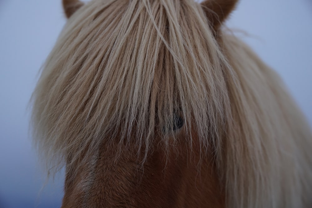 close-up-horse-blond-fringe-alpha-7RII