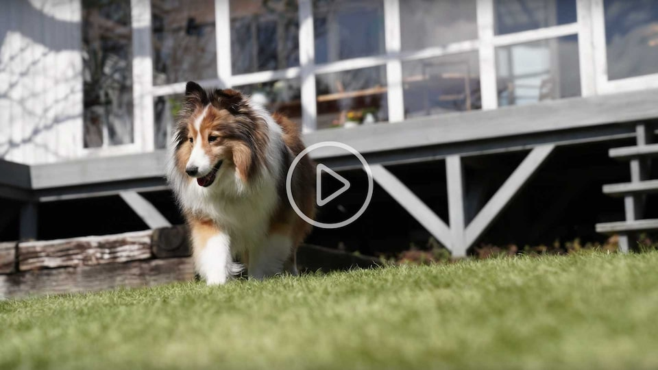 Sony | α | Real-time Eye AF for Animals | From a pet's point-of-view